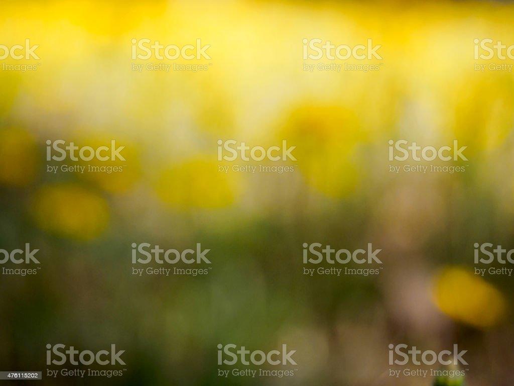 Campo de flores impressionista fundo foto royalty-free