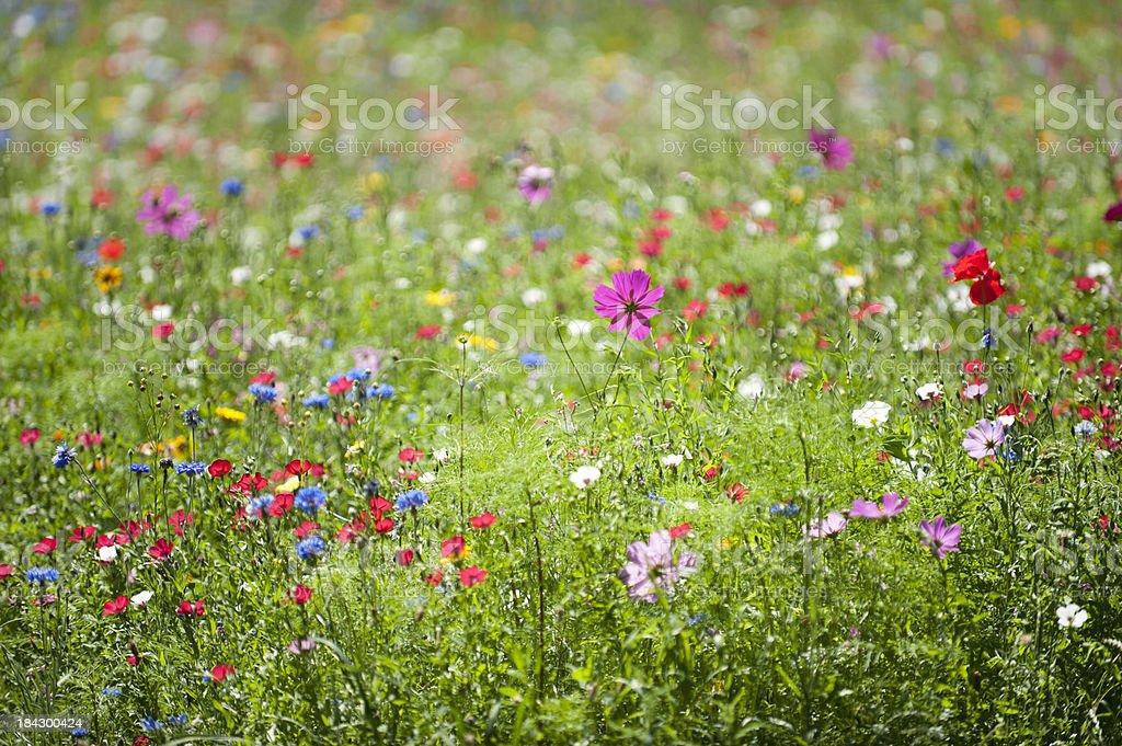 Field of flowers stock photo