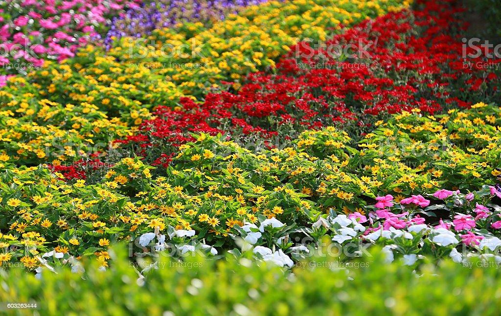 Campo de flores foto de stock libre de derechos