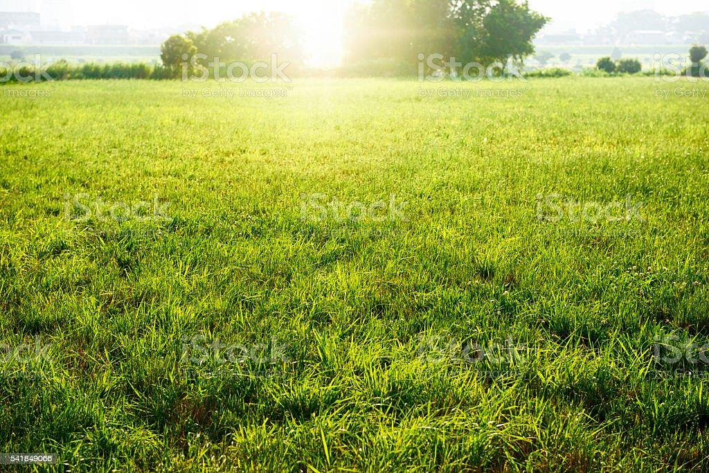 Field of fresh green stock photo