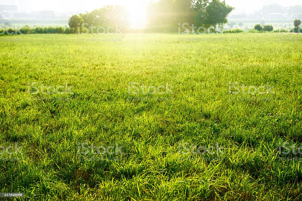 Field of fresh green stock photo