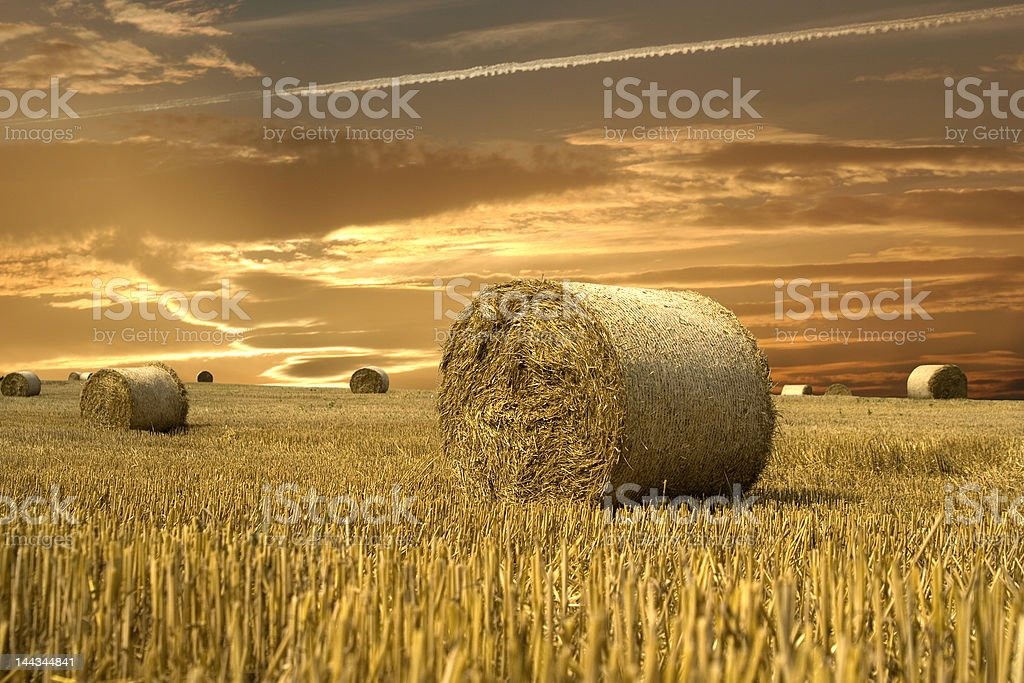 Field of gold royalty-free stock photo
