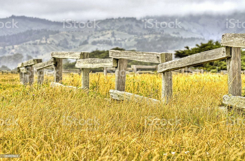 Field of Gold stock photo