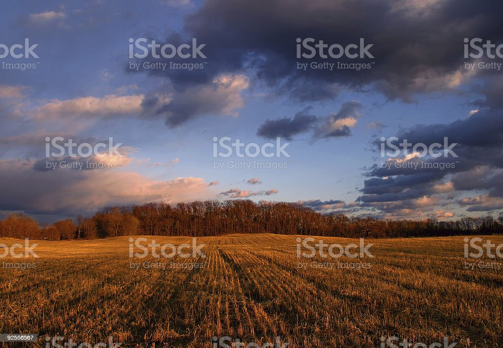 Field of grains at sunset under a cloudy sky stock photo