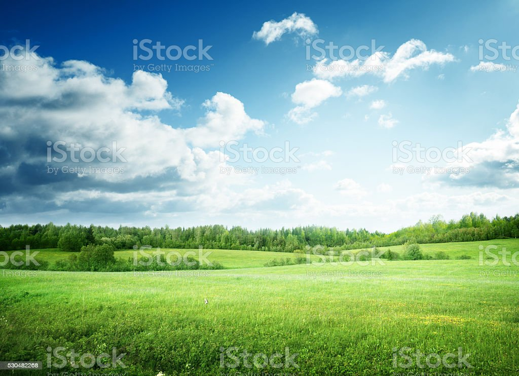 field of grass and perfect sky stock photo