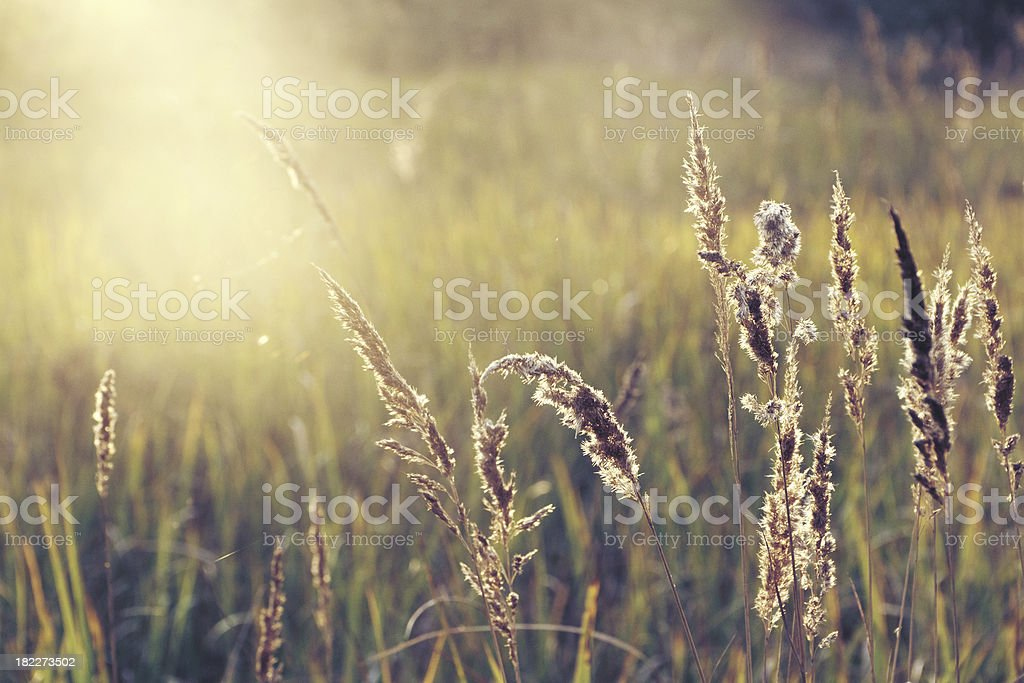 Field of grass during sunset stock photo