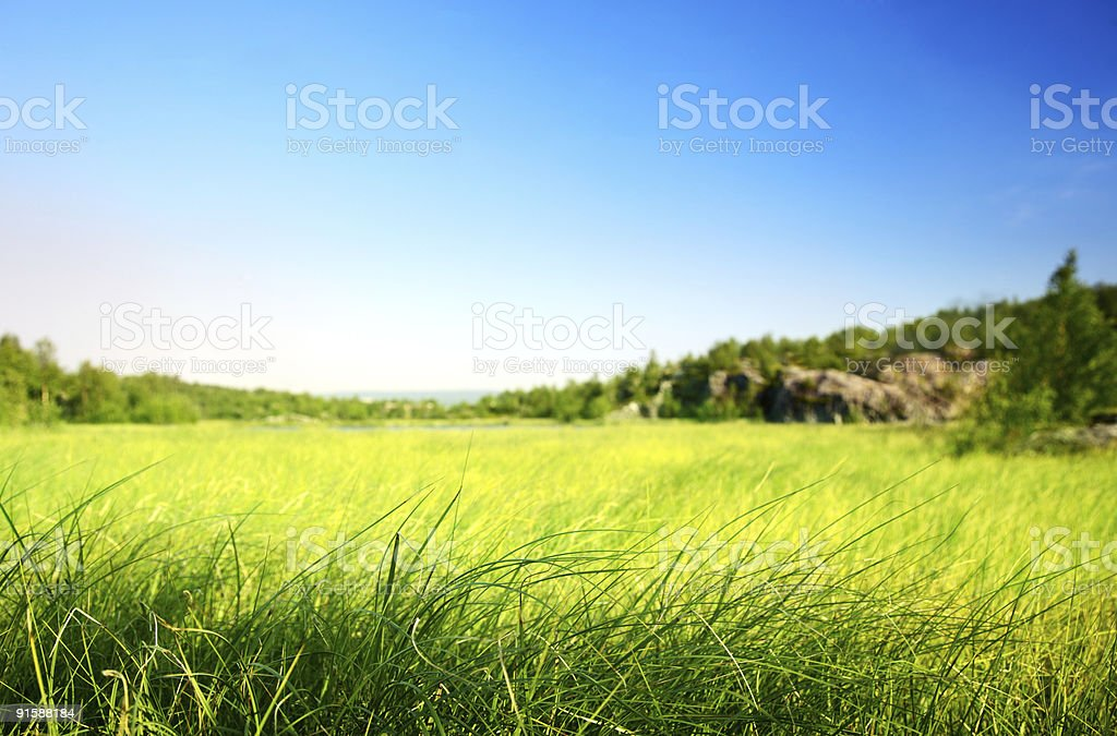 field of grass in north mountain (shallow DOF) royalty-free stock photo
