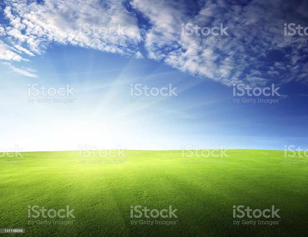 field of grass in sunset time royalty-free stock photo