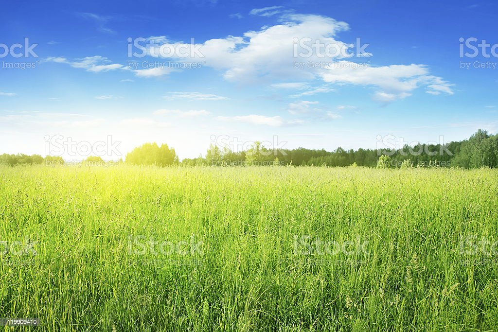 Field of grass on sunny day. stock photo