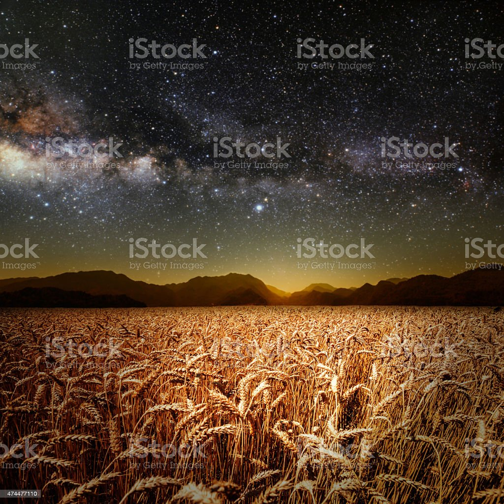field of grass stock photo
