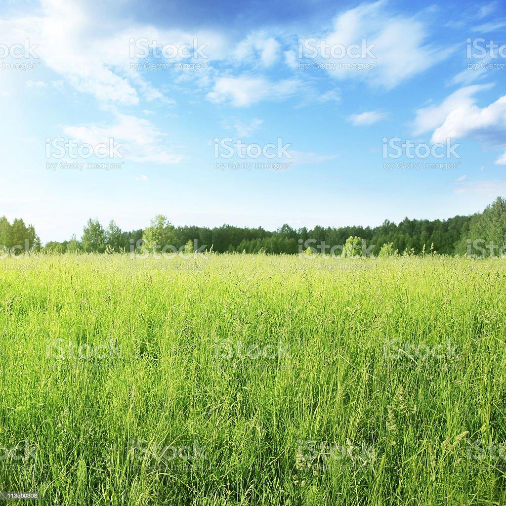 Field of grass under blue sky. stock photo