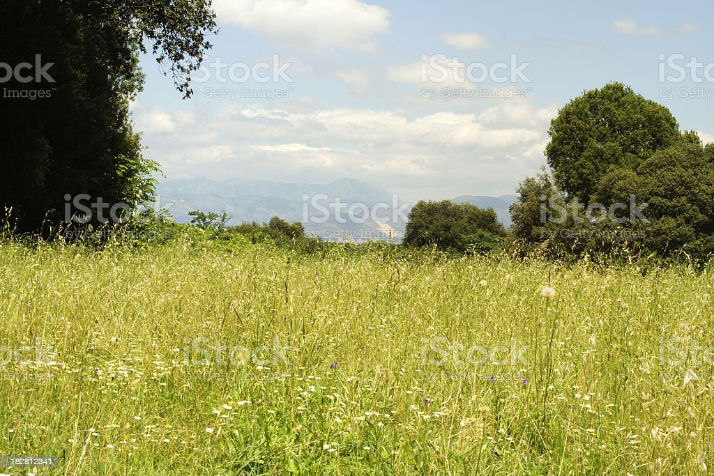 Field of Grass with Trees and Mountains royalty-free stock photo