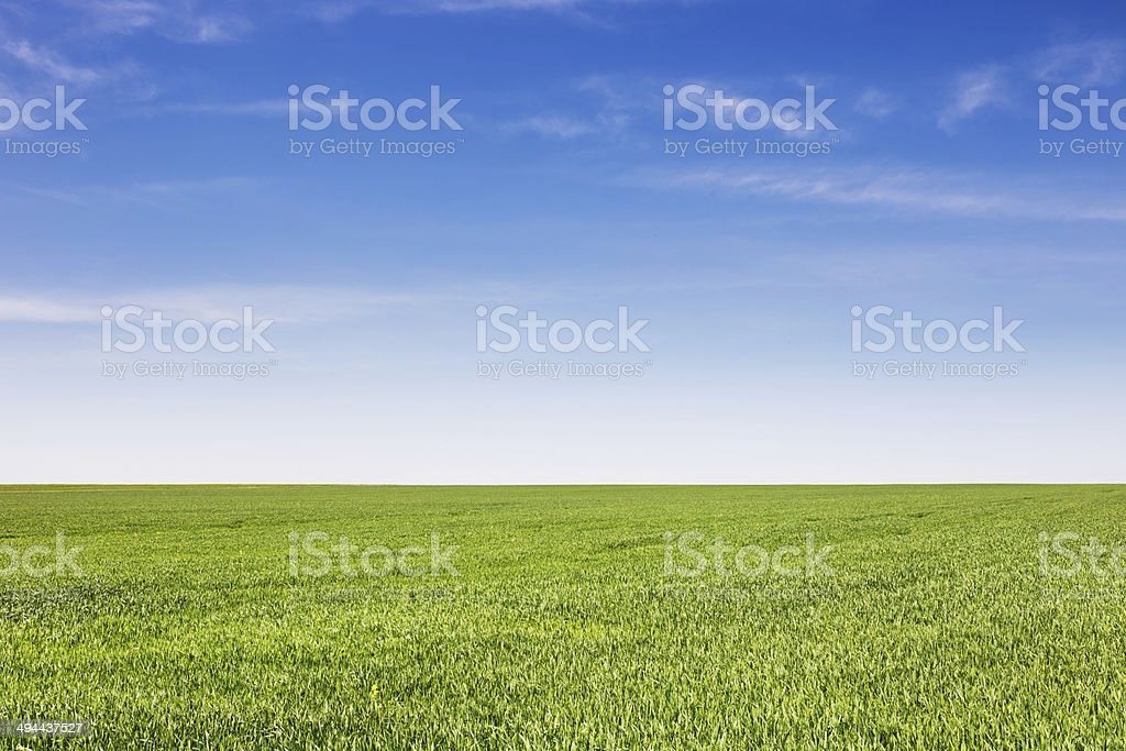 Field of green grass, natural color royalty-free stock photo