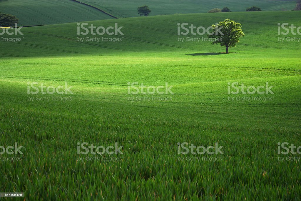 Field of green grass with a single tree stock photo