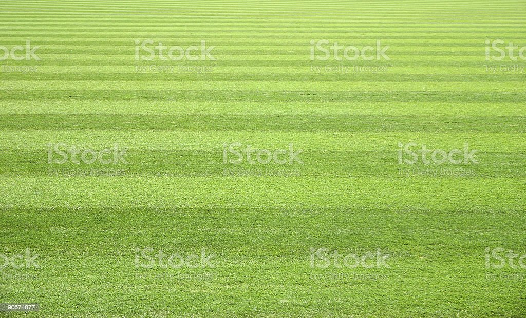 Field of Green stock photo