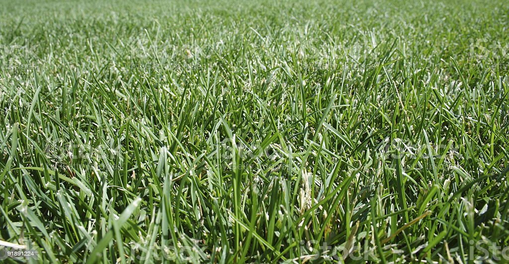 Field of Green royalty-free stock photo