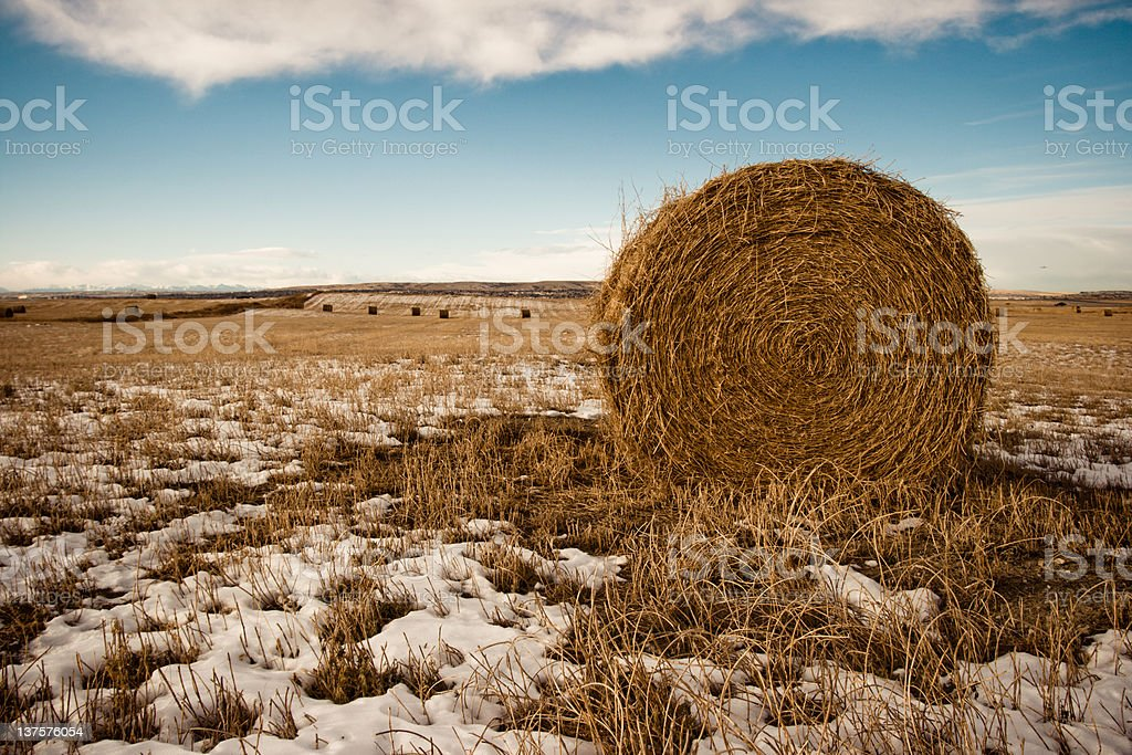 field of hay bale in winter royalty-free stock photo