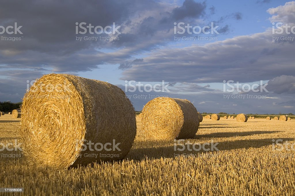 Field of Hay Bales stock photo