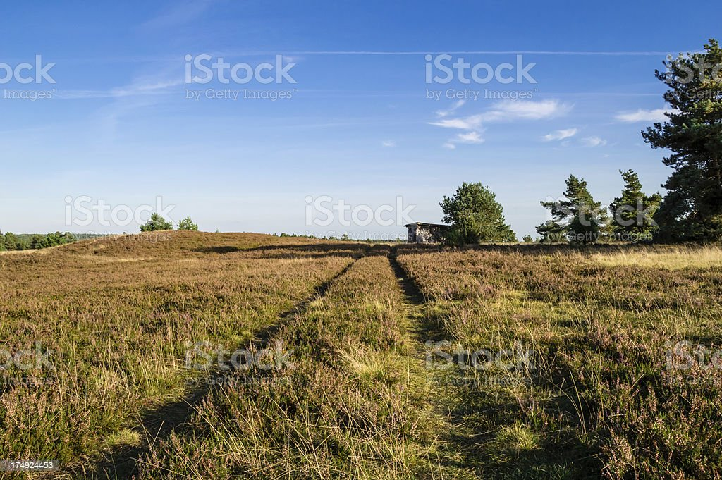 Field of heather with footpath royalty-free stock photo
