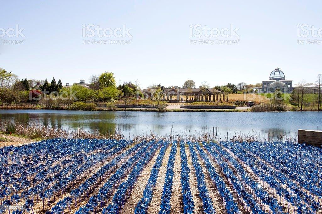 Field of Pinwheels stock photo