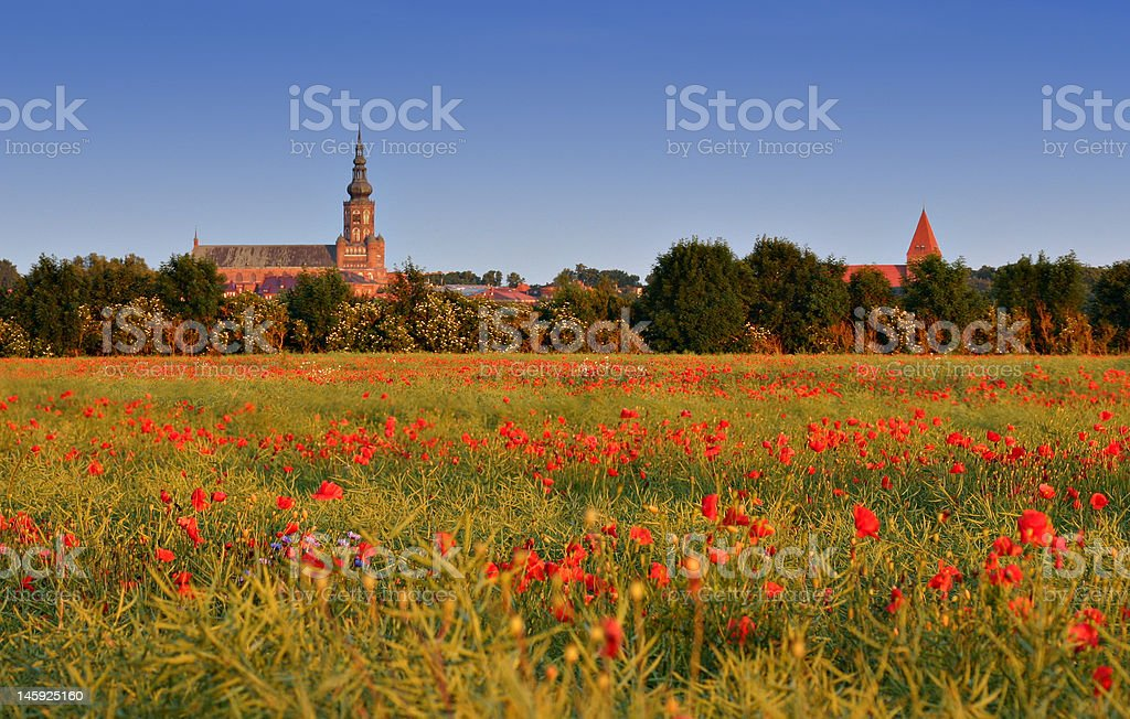 Field of poppies with skyline royalty-free stock photo