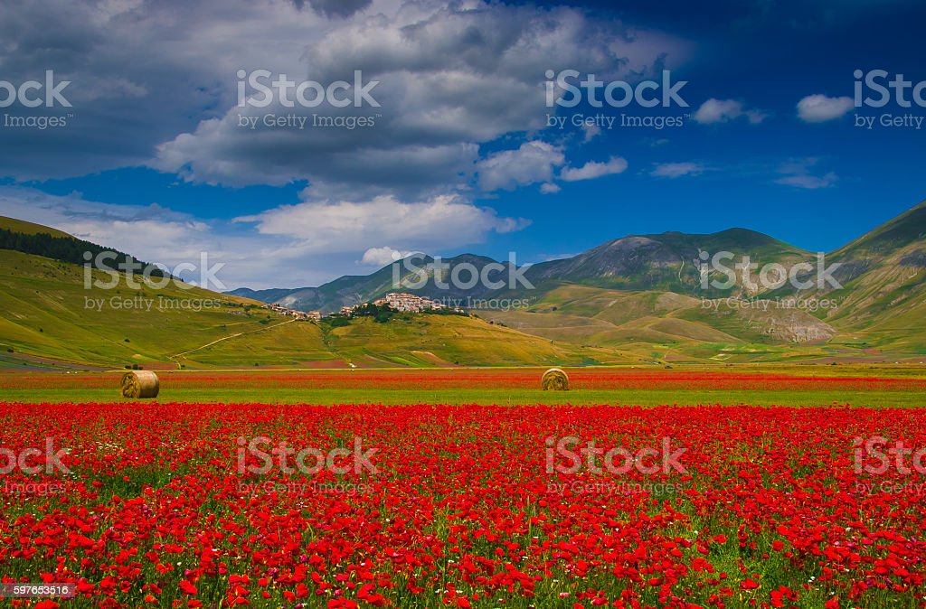 Field of red poppies, Castelluccio di Norcia stock photo