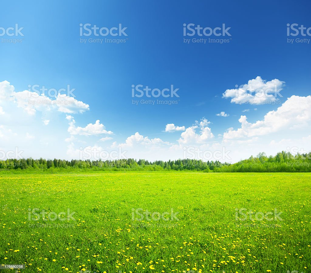field of spring flowers and perfect sky royalty-free stock photo