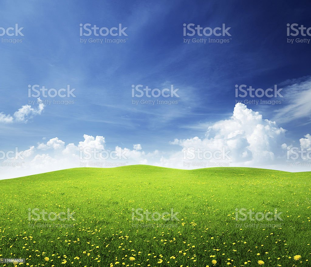 field of spring flowers royalty-free stock photo