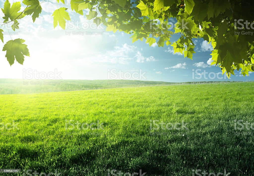 field of spring grass and forest stock photo