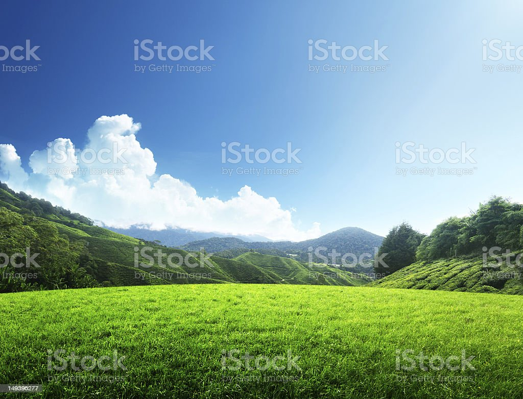 field of spring grass and mountain royalty-free stock photo