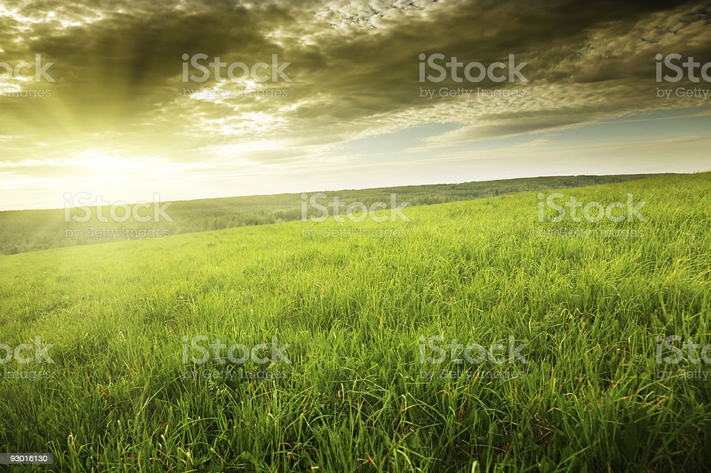 field of spring grass and sunset stock photo