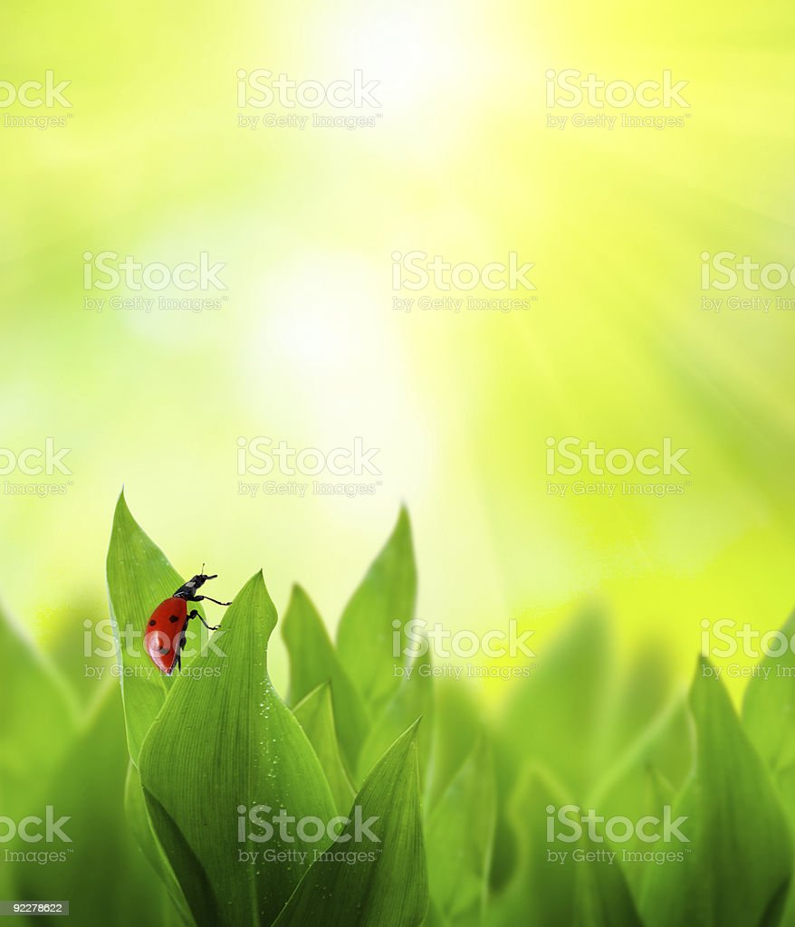 field of spring grass royalty-free stock photo