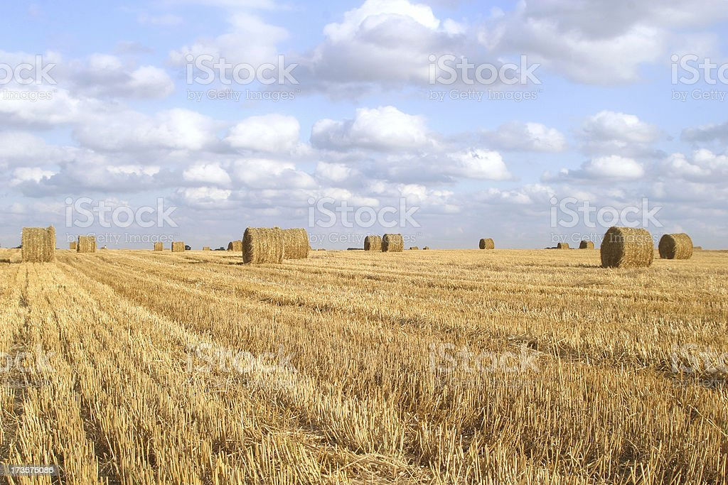 field of straw bales 1 royalty-free stock photo