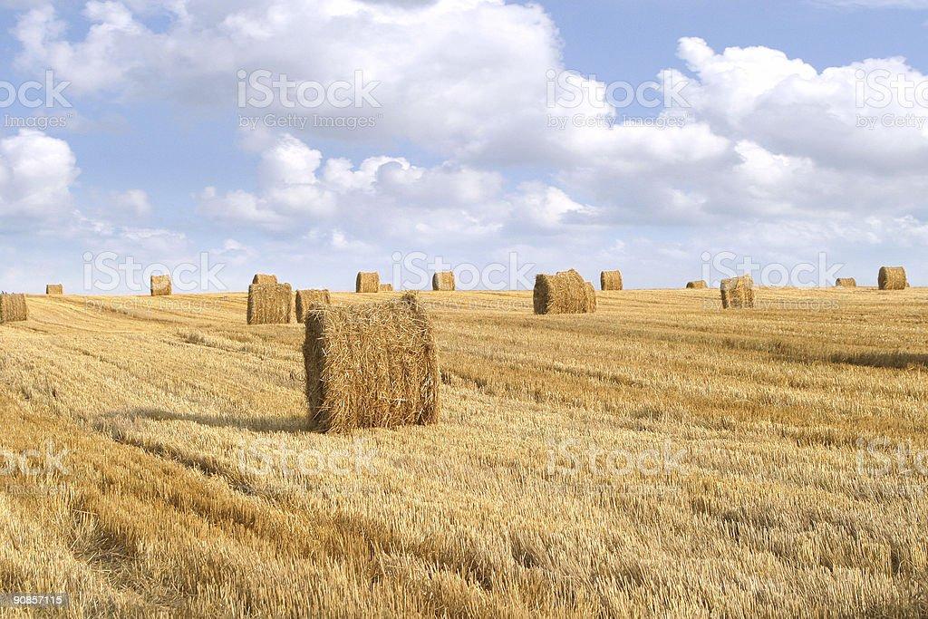 field of straw bales 2 stock photo