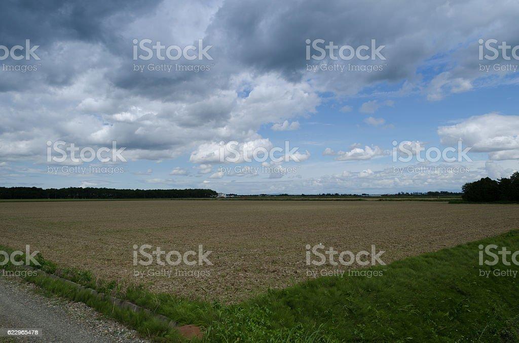 Field of Tokachi stock photo