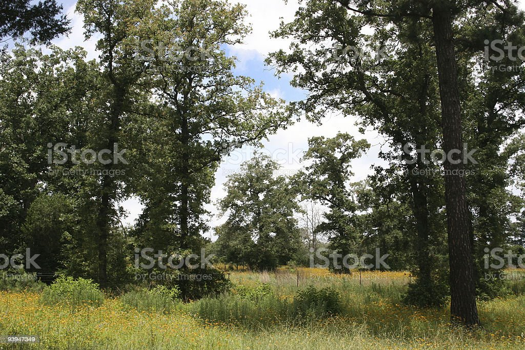 Field of trees and flowers near Austin Texas royalty-free stock photo