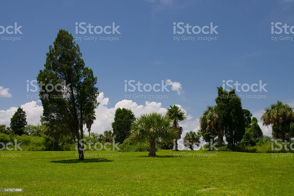 Field of Trees stock photo