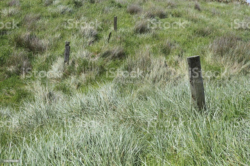 Field of tussock grass stock photo