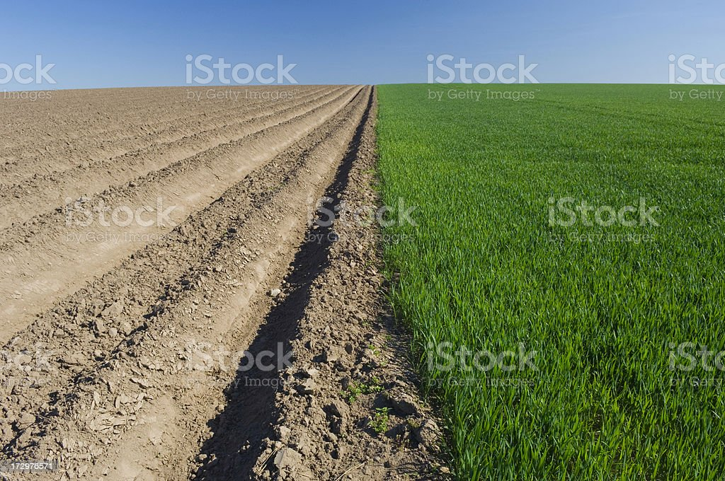 Field of two halves royalty-free stock photo