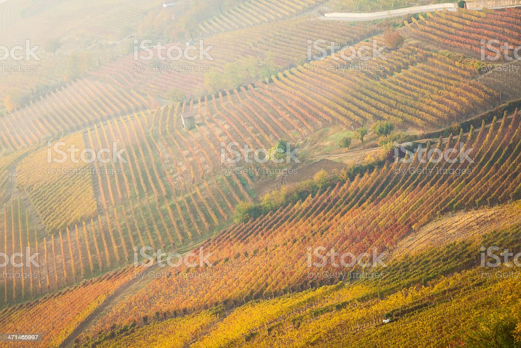 FIeld of vineyard in Tuscany royalty-free stock photo