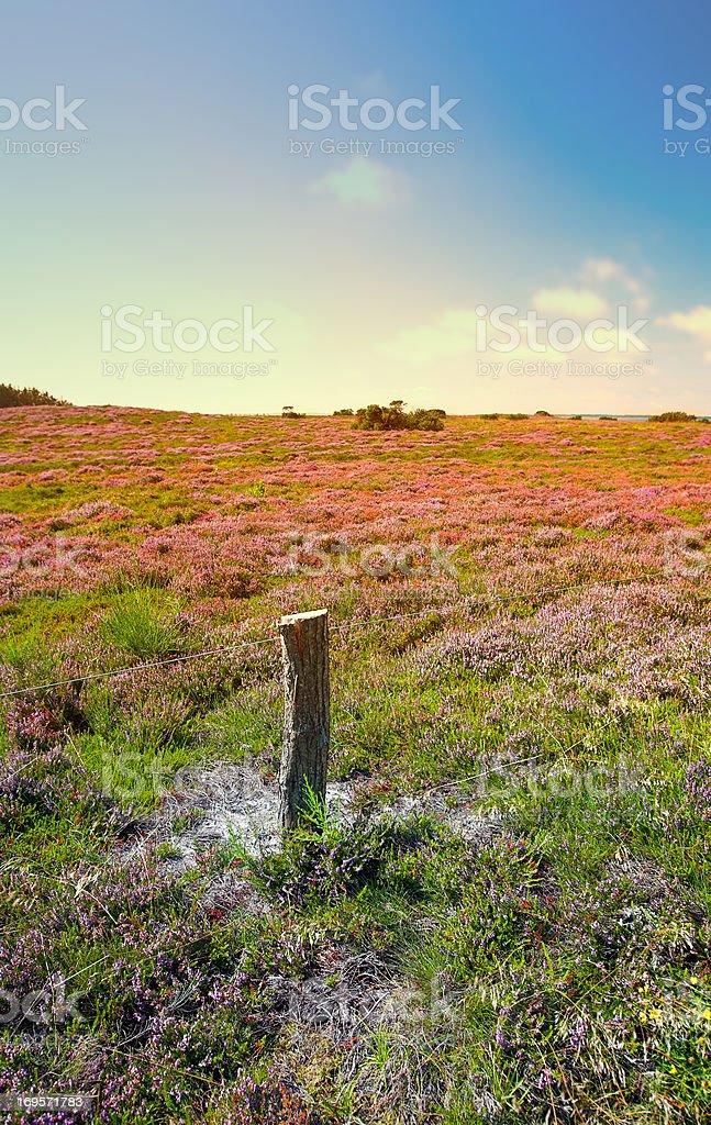 Field of wild beauty stock photo