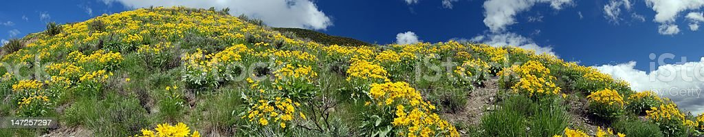 Field of Wild Flowers at Hoback Junction royalty-free stock photo