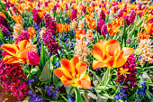 field of wild flowers. Spring landscape. Holland