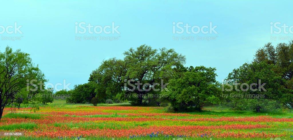 Field of Wildfllowers stock photo