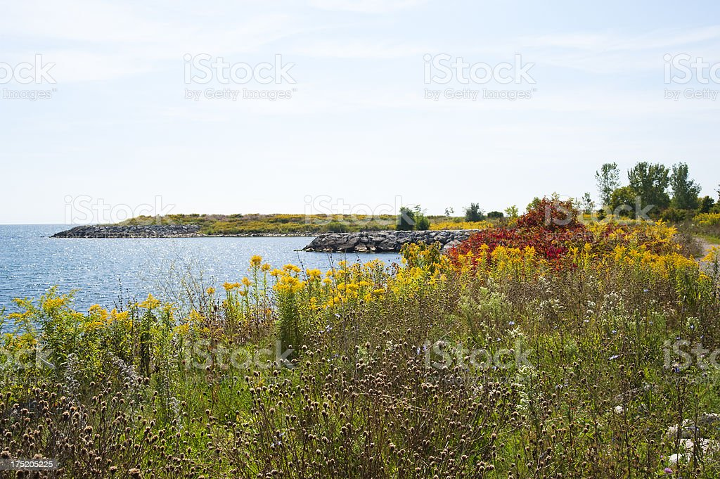 Field of Wildflowers Beside the Lake royalty-free stock photo