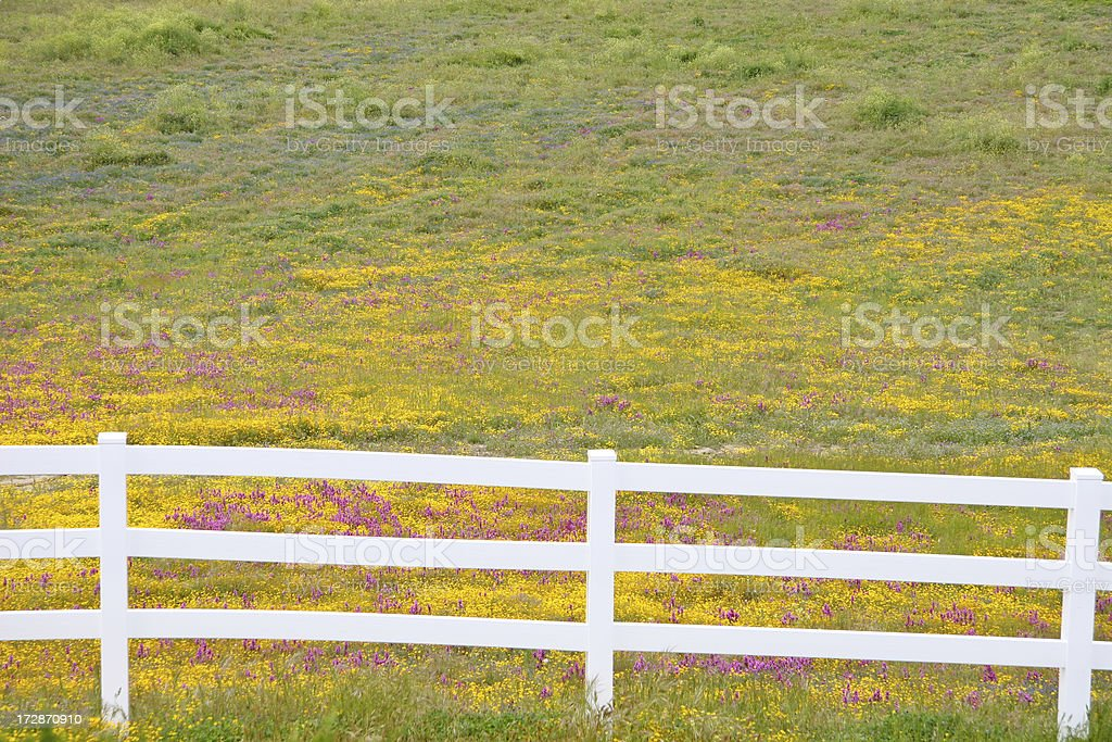 Field of wildflowers stock photo