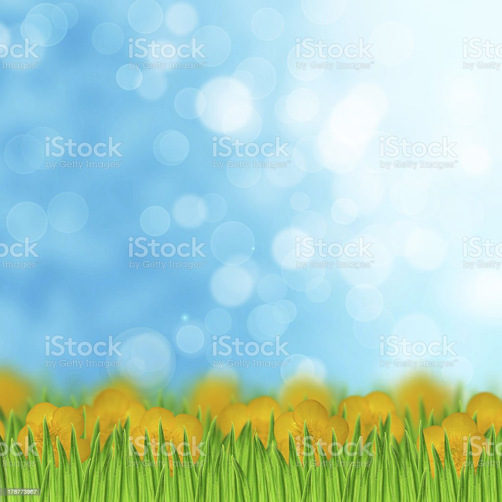 Field of yellow flowers and grass on the sky background royalty-free stock photo