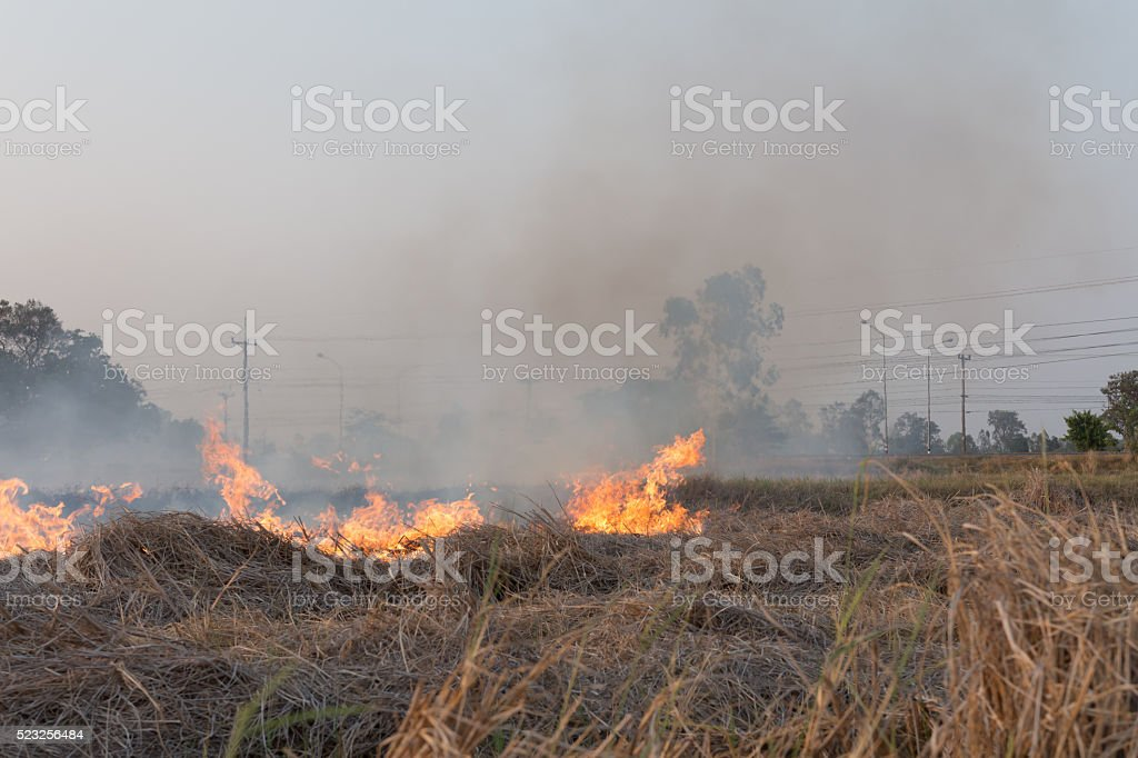 Field on fire, burning dry grass near the highway stock photo