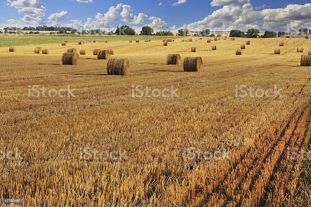 Field on summer. stock photo