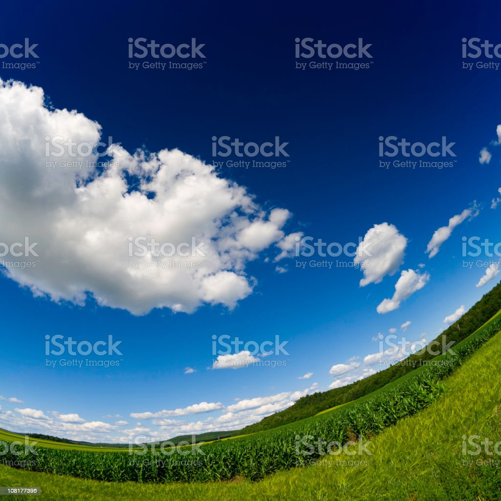 Field on Sunny Day, Fisheye royalty-free stock photo